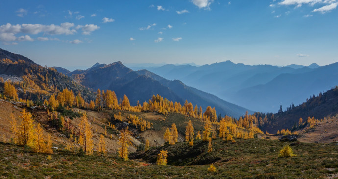 Larch meadows in the Entiats