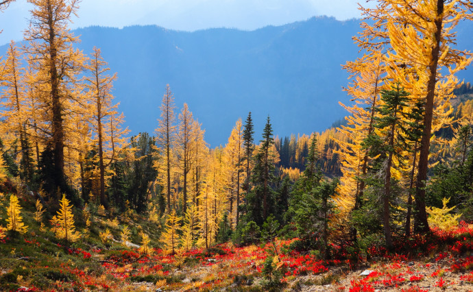 Gorgeous autumn colors in the Entiat Mountains